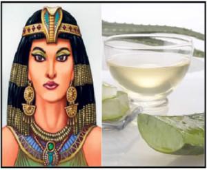 Antico Egitto, l'Aloe Vera era l'elisir di bellezza di Cleopatra. Ecco perchè.