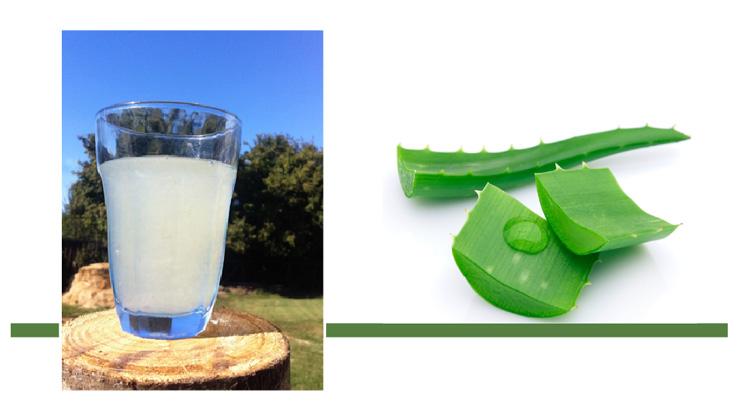 bicchiere con aloe più foglie